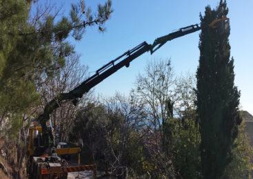Κλάδευση Υψηλών Δέντρων σε Δήμους